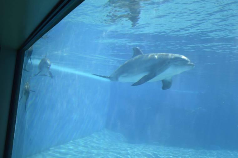 mirage dolphin underwater