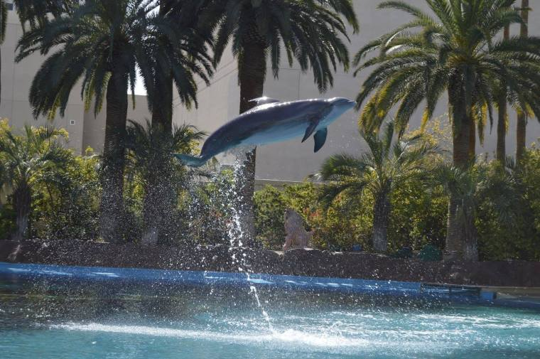 mirage - dolphin